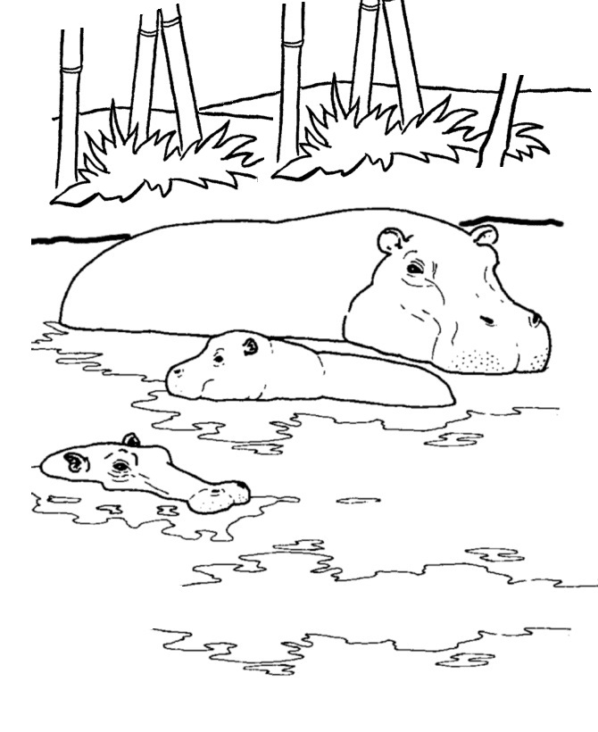 coloring picture hippo snorkeling hippo coloring page free printable coloring pages coloring picture hippo
