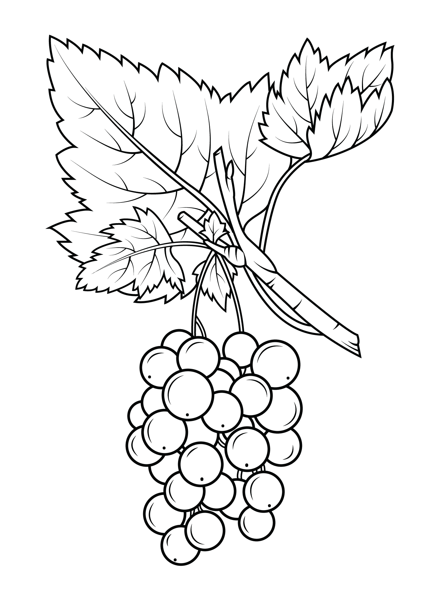 coloring picture of grapes coloring picture of grapes coloring picture of grapes