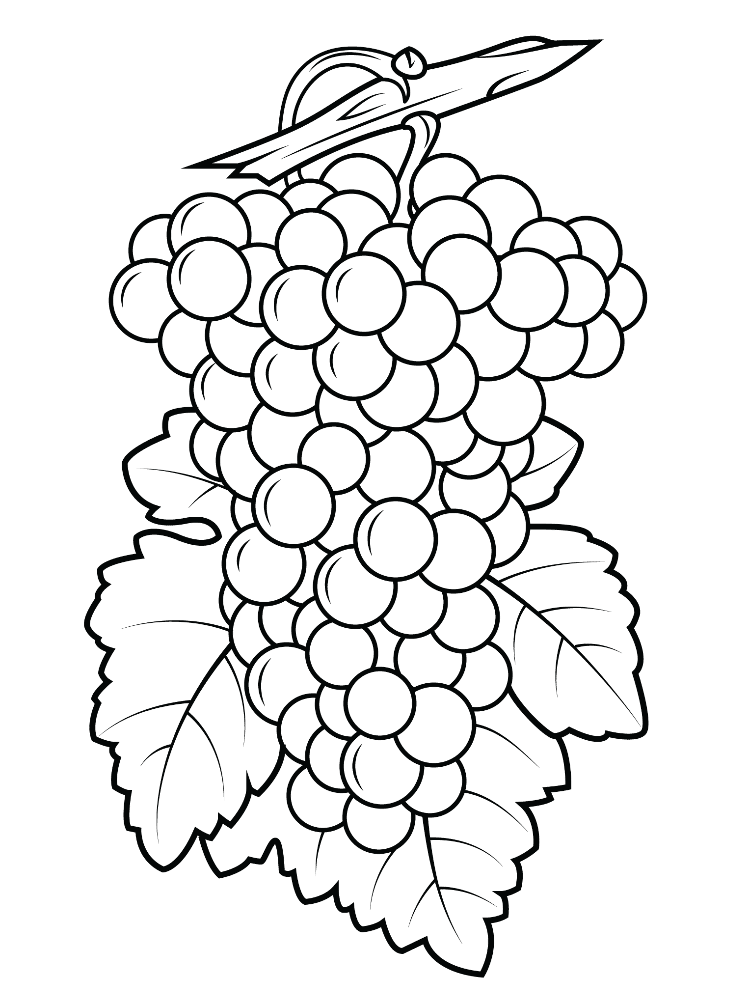 coloring picture of grapes flavoursome grapes colouring pages picolour of grapes picture coloring