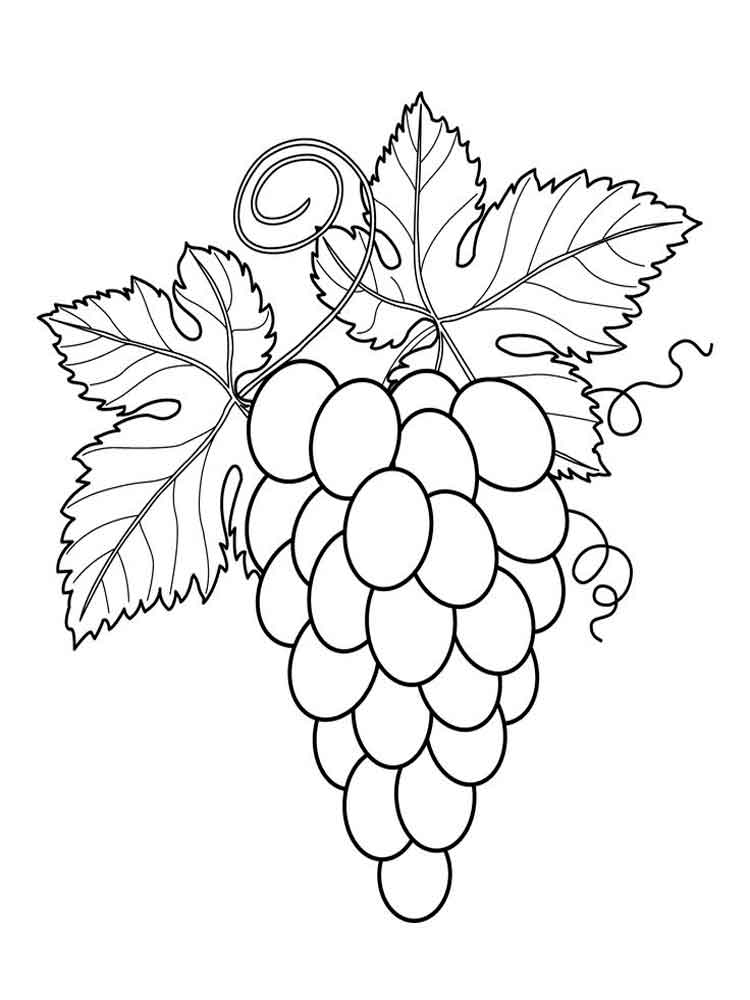 coloring picture of grapes grape coloring pages coloring pages to download and print grapes coloring picture of