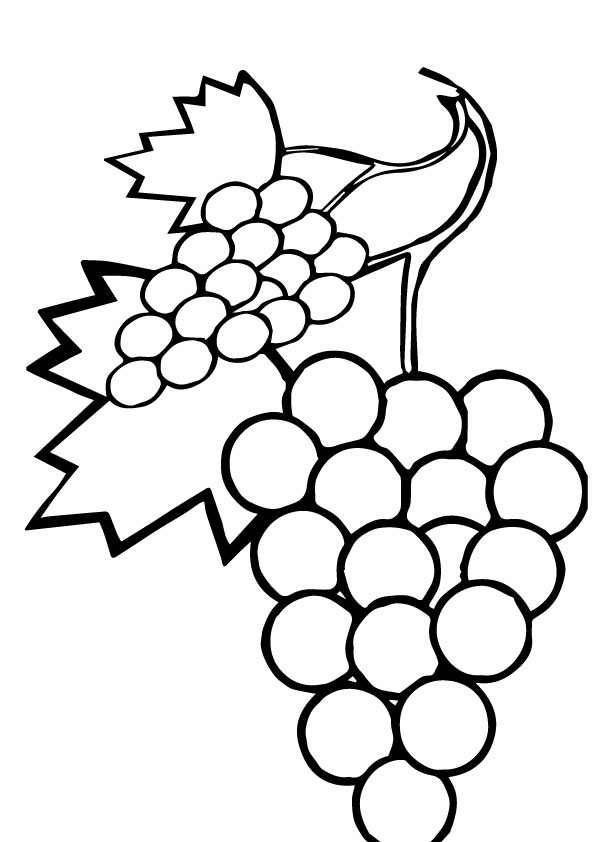 coloring picture of grapes grapes coloring pages best coloring pages for kids of coloring picture grapes