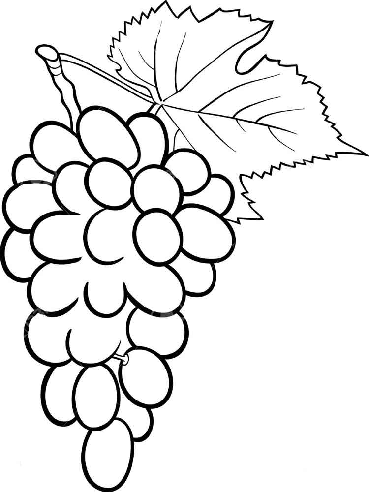 coloring picture of grapes grapes coloring pages best coloring pages for kids of picture coloring grapes