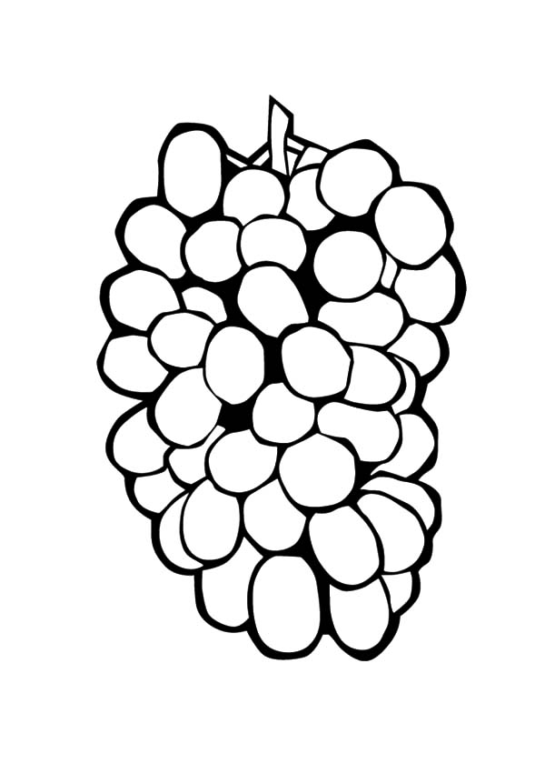coloring picture of grapes grapes coloring pages of grapes coloring picture
