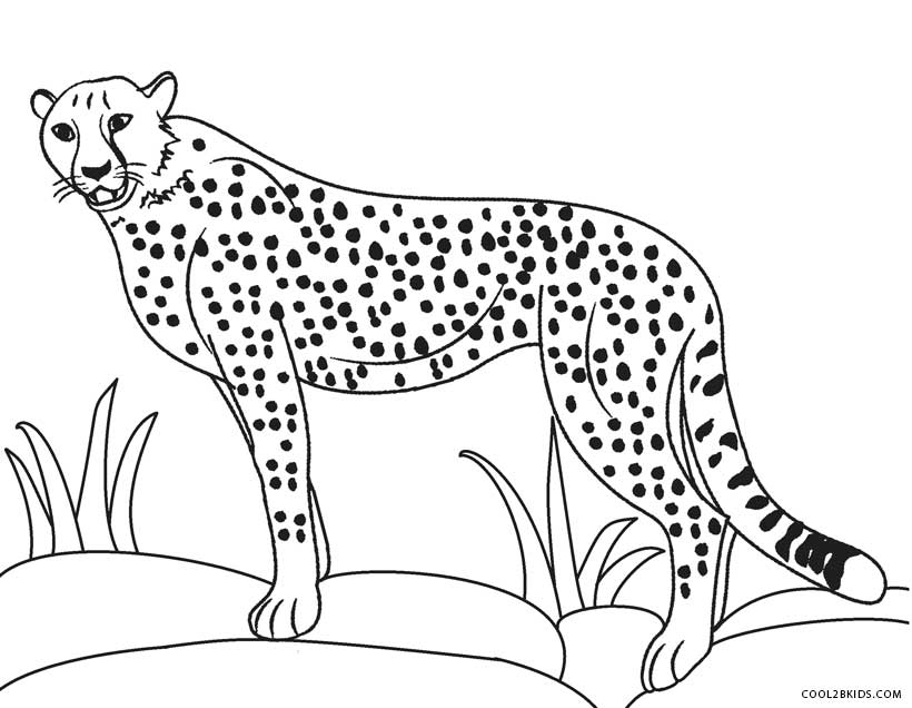 coloring pictures of cheetahs cheetah color sheet cheetah coloring pages coloring of coloring cheetahs pictures