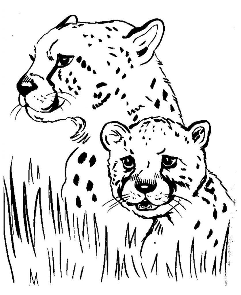 coloring pictures of cheetahs cheetah coloring pages download and print cheetah of cheetahs pictures coloring