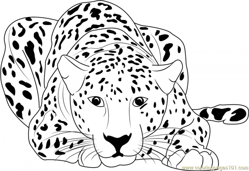 coloring pictures of cheetahs cheetah coloring pages learny kids pictures coloring cheetahs of