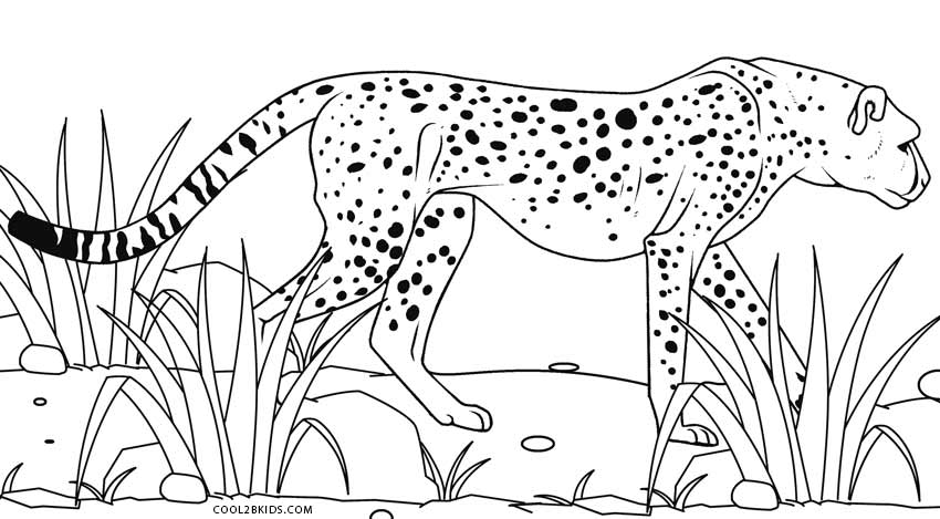 coloring pictures of cheetahs cheetah sleeping coloring page free cheetah coloring pictures cheetahs of coloring