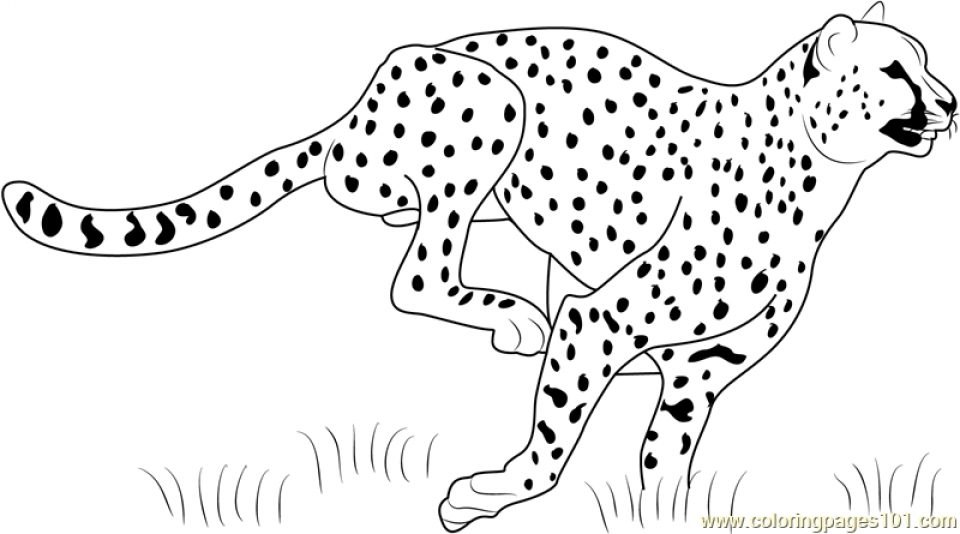 coloring pictures of cheetahs cute baby cheetah coloring pages coloring home pictures coloring cheetahs of