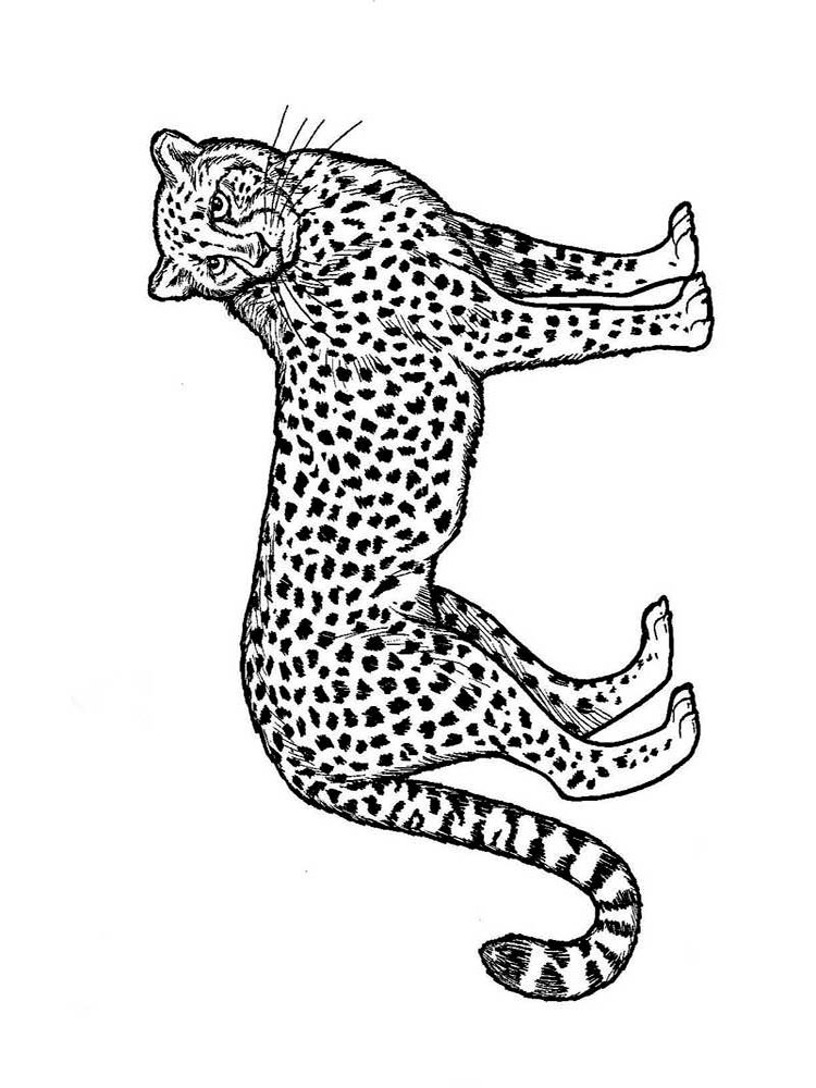 coloring pictures of cheetahs cute cheetah playing with a ball coloring page free pictures cheetahs of coloring