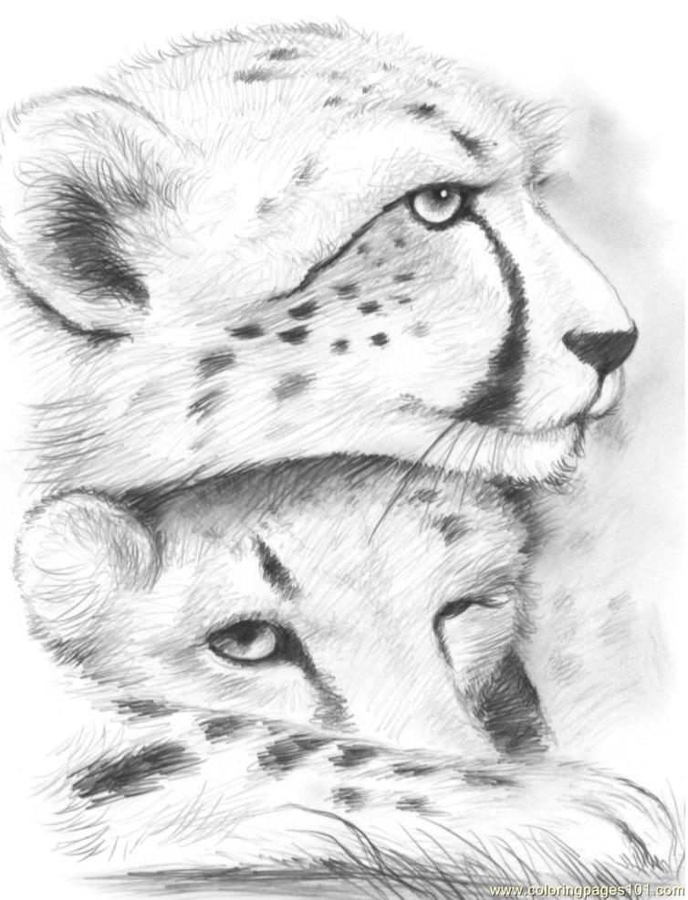 coloring pictures of cheetahs printable cheetah coloring pages for kids cool2bkids coloring pictures cheetahs of