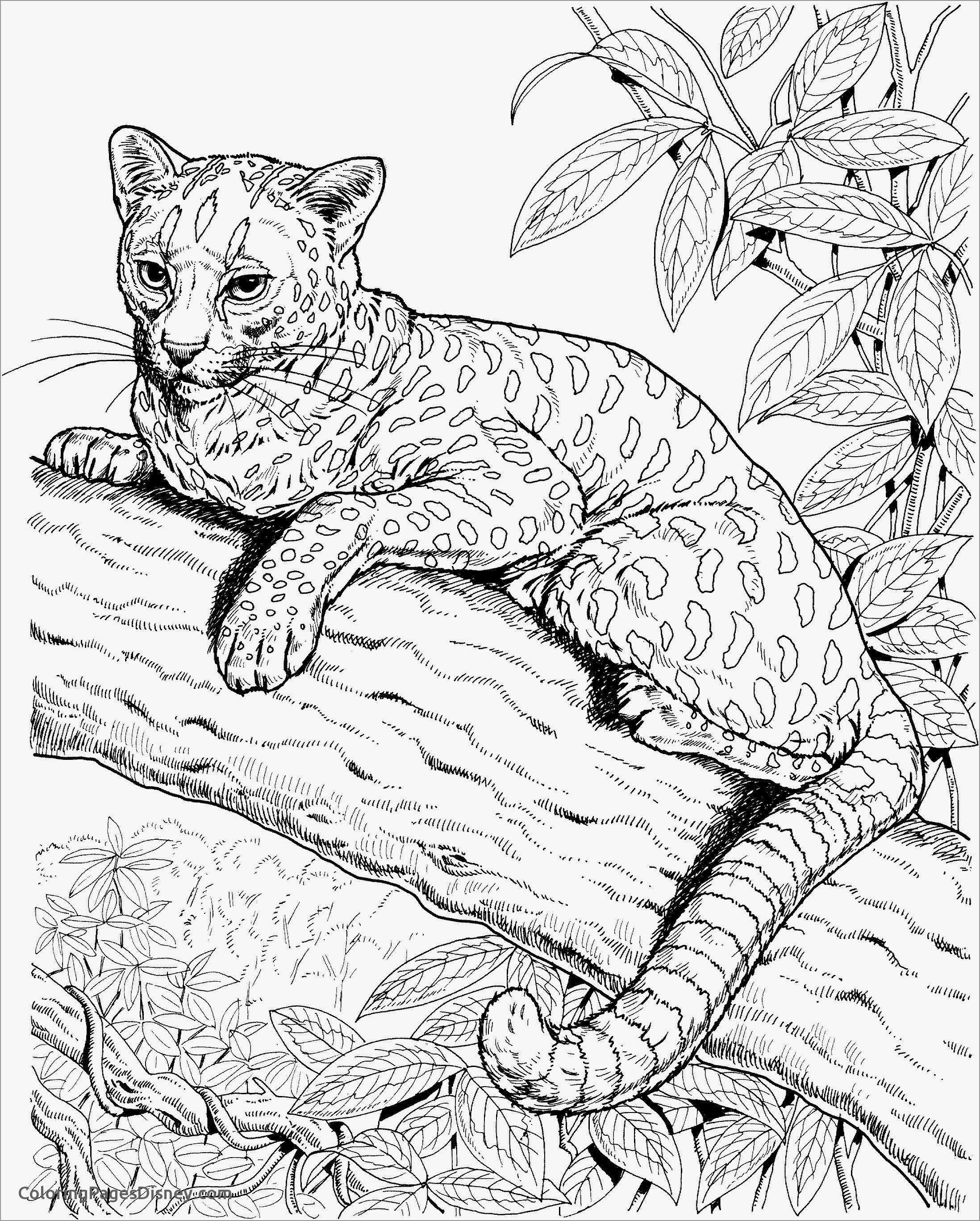 coloring pictures of cheetahs printable cheetah coloring pages for kids pictures of coloring cheetahs