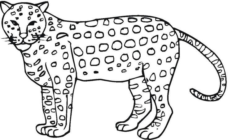 coloring pictures of cheetahs the best cheetah coloring pages for adults best coloring pictures cheetahs coloring of