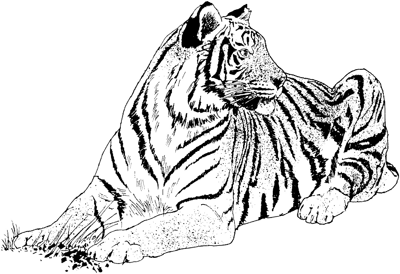 coloring pictures of tigers free tiger coloring pages pictures tigers coloring of