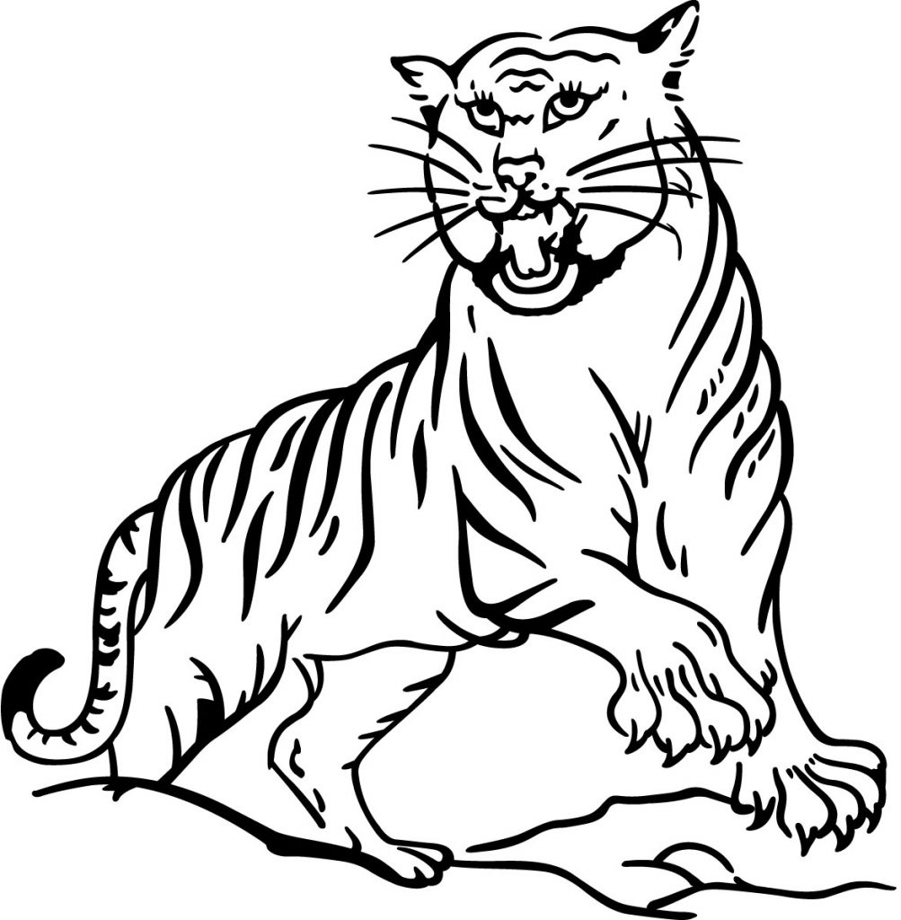 coloring pictures of tigers tiger line drawings for coloring of tigers coloring pictures