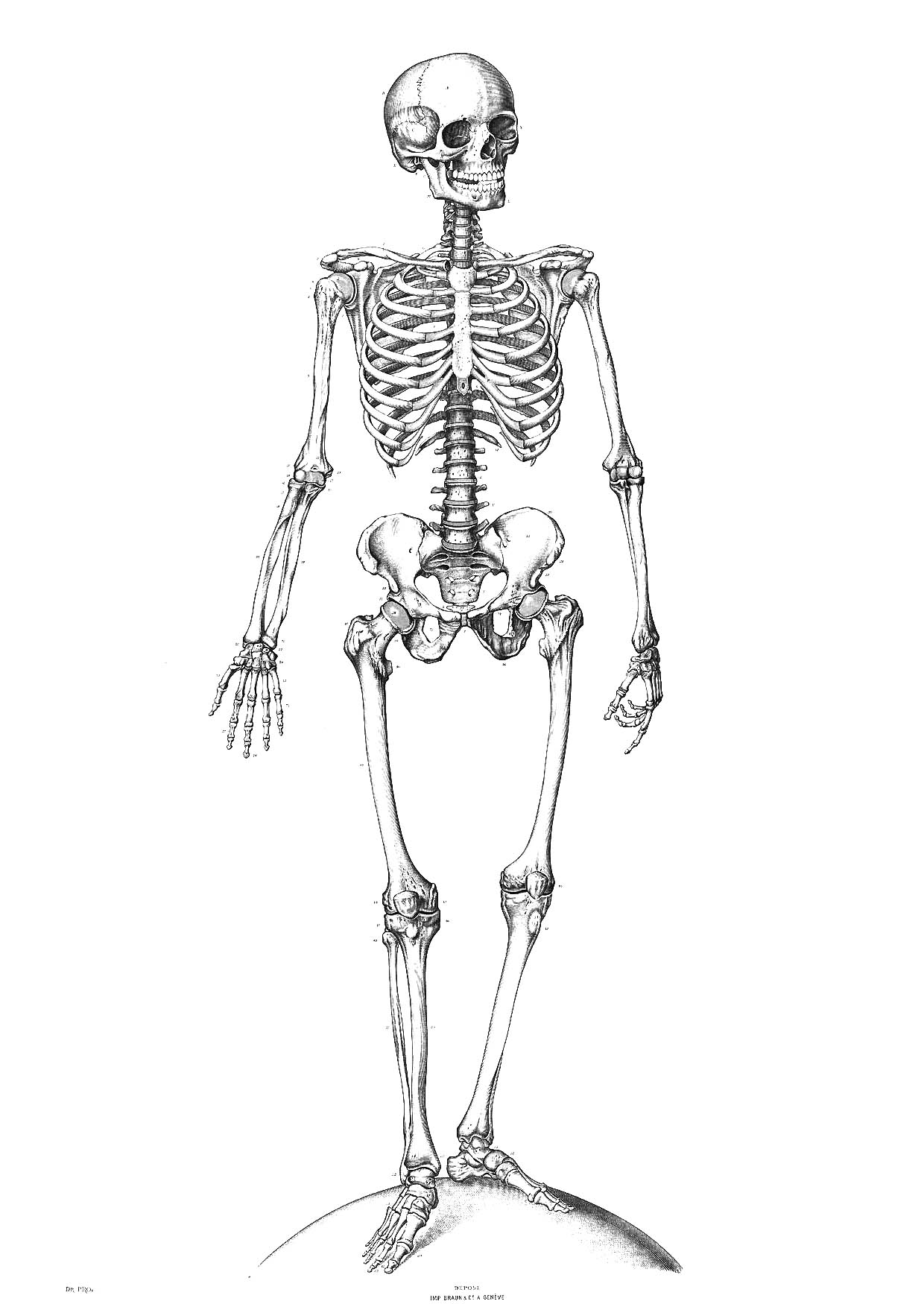 coloring skull bones cartoon skeleton coloring pages at getcoloringscom free bones skull coloring