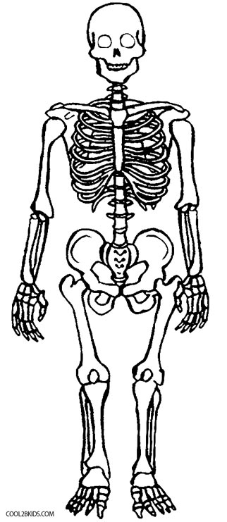 coloring skull bones human bones drawing at getdrawings free download coloring bones skull