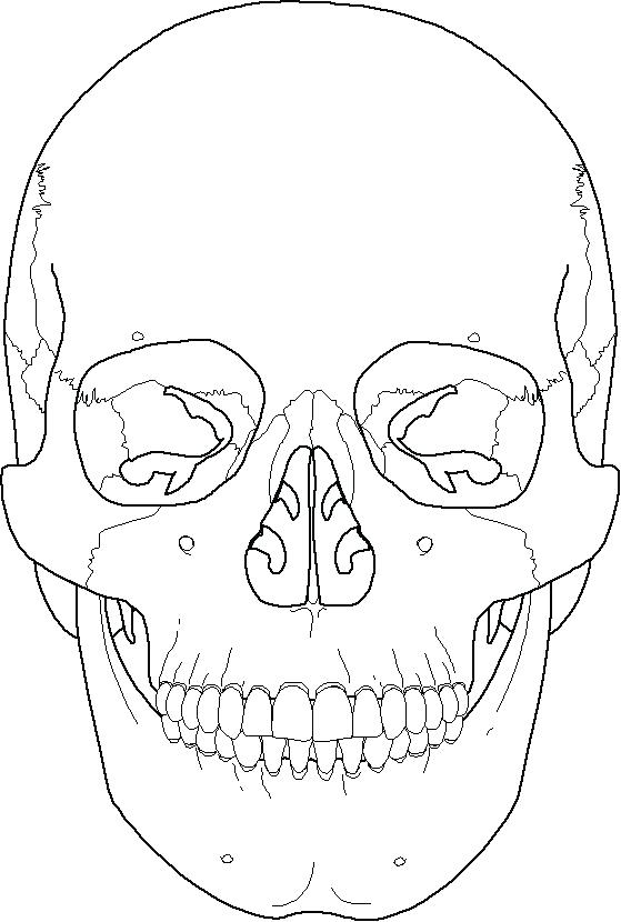 coloring skull bones skeleton coloring pages anatomy at getcoloringscom free coloring bones skull