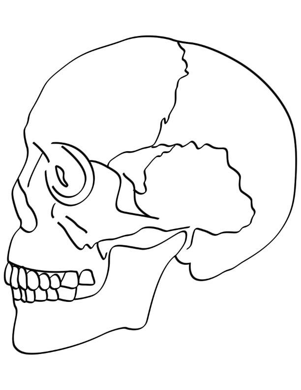 coloring skull bones skeleton head coloring pages at getcoloringscom free skull coloring bones