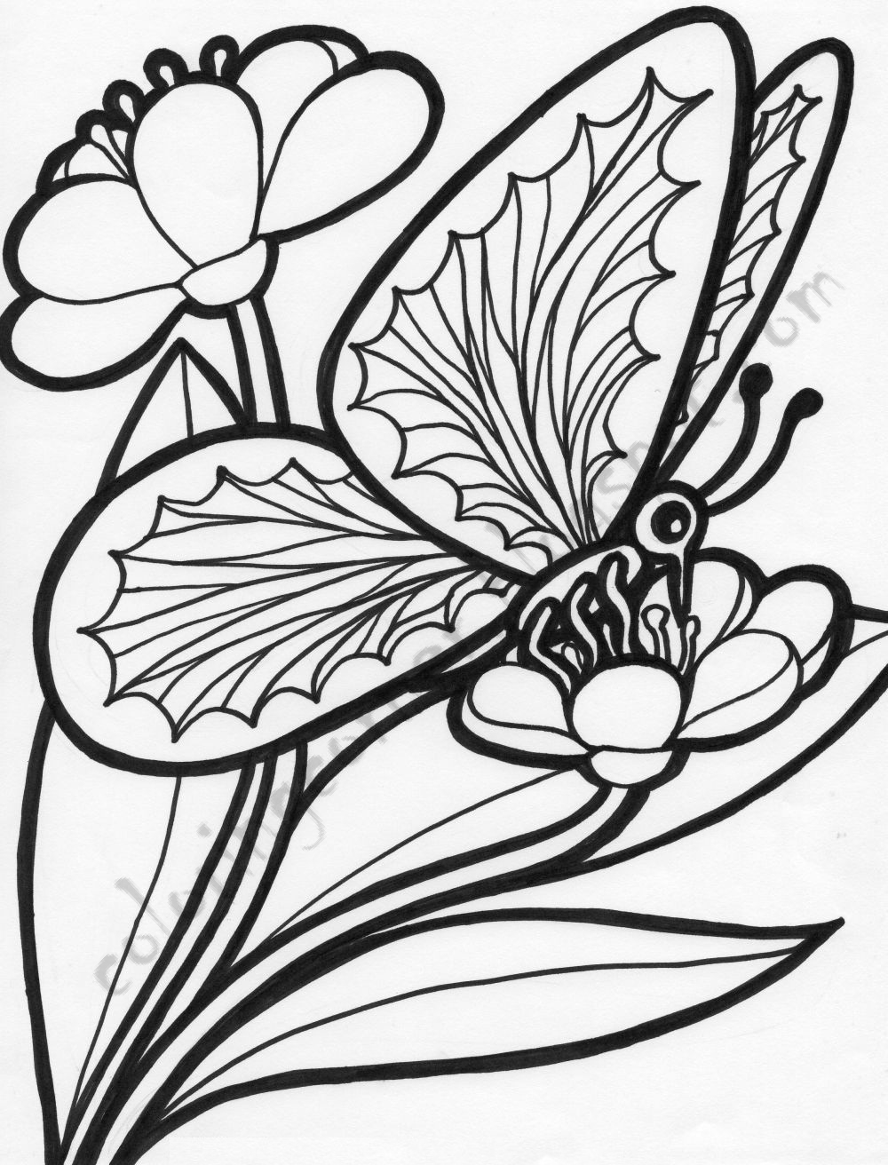 colouring page of flowers beautiful printable flowers coloring pages flowers of page colouring