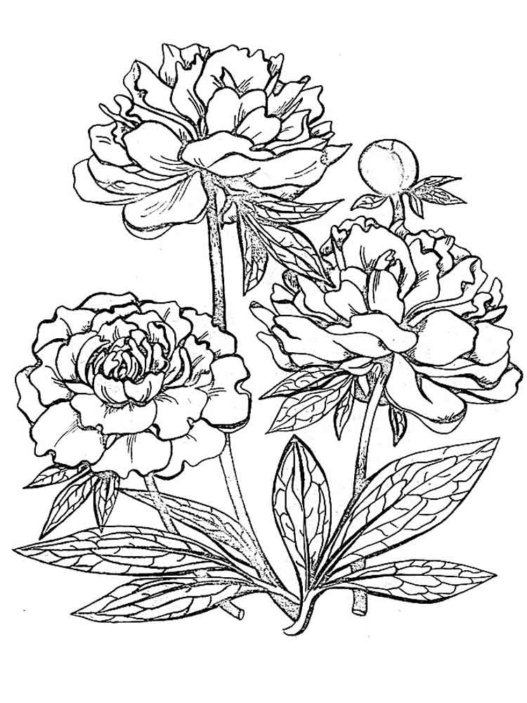 colouring page of flowers flowers printing pages creative children page flowers of colouring