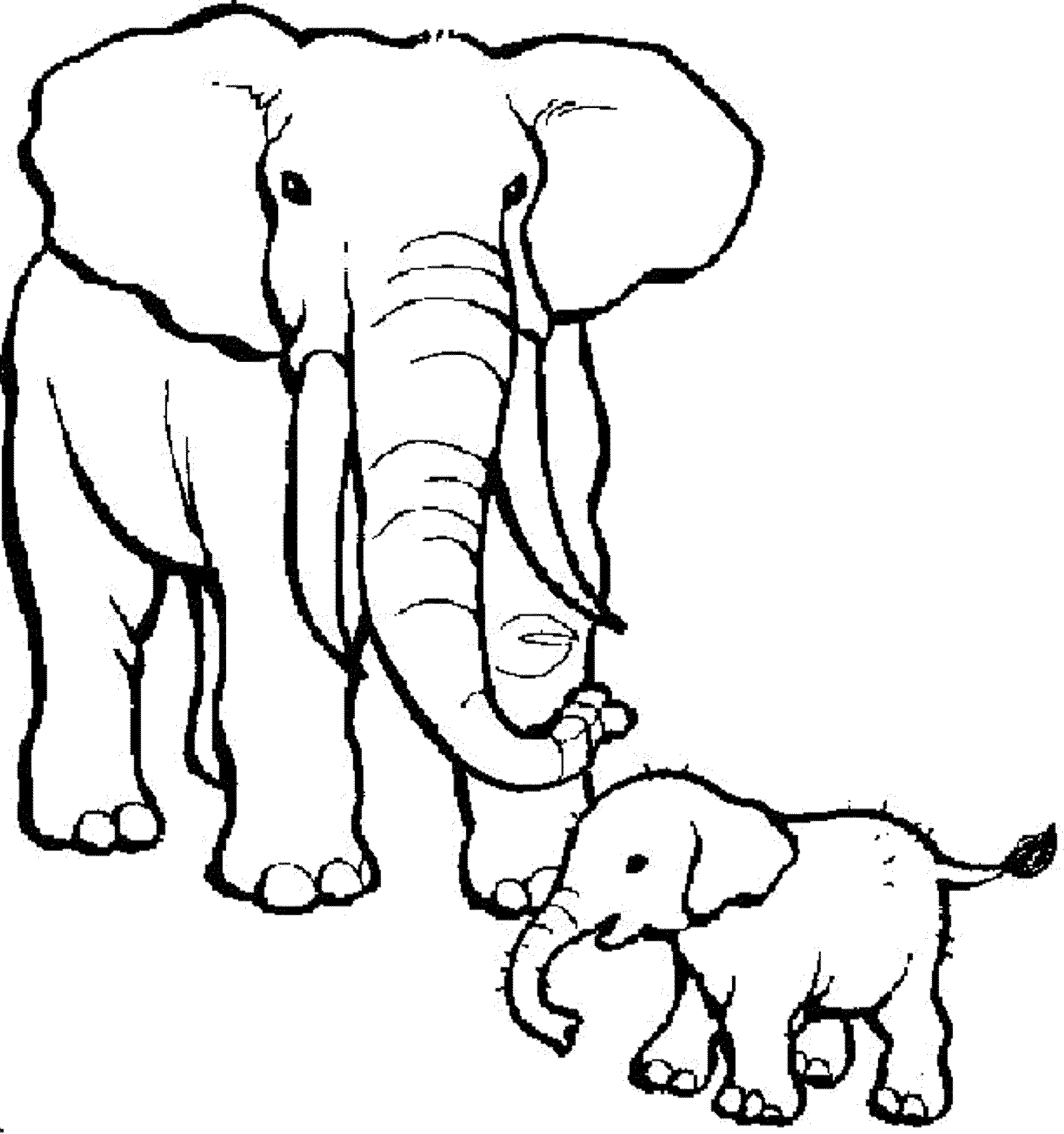 colouring pages of elephant elegant drawing of an elephant elephants adult coloring pages elephant of colouring