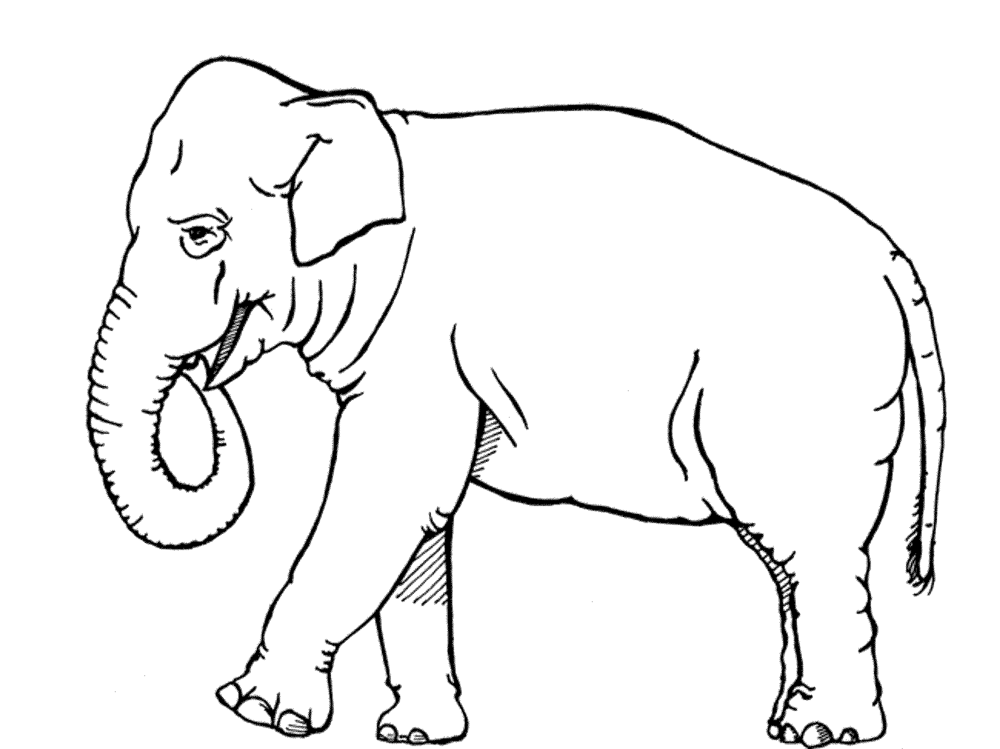 colouring pages of elephant free printable elephant coloring pages for kids colouring elephant pages of