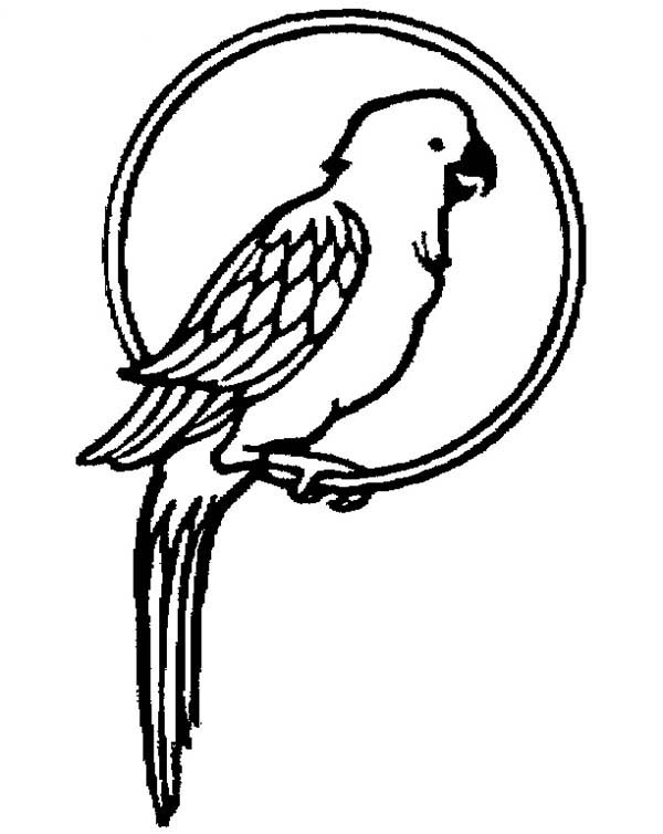 colouring picture of parrot free printable parrot coloring pages for kids animal place parrot of colouring picture