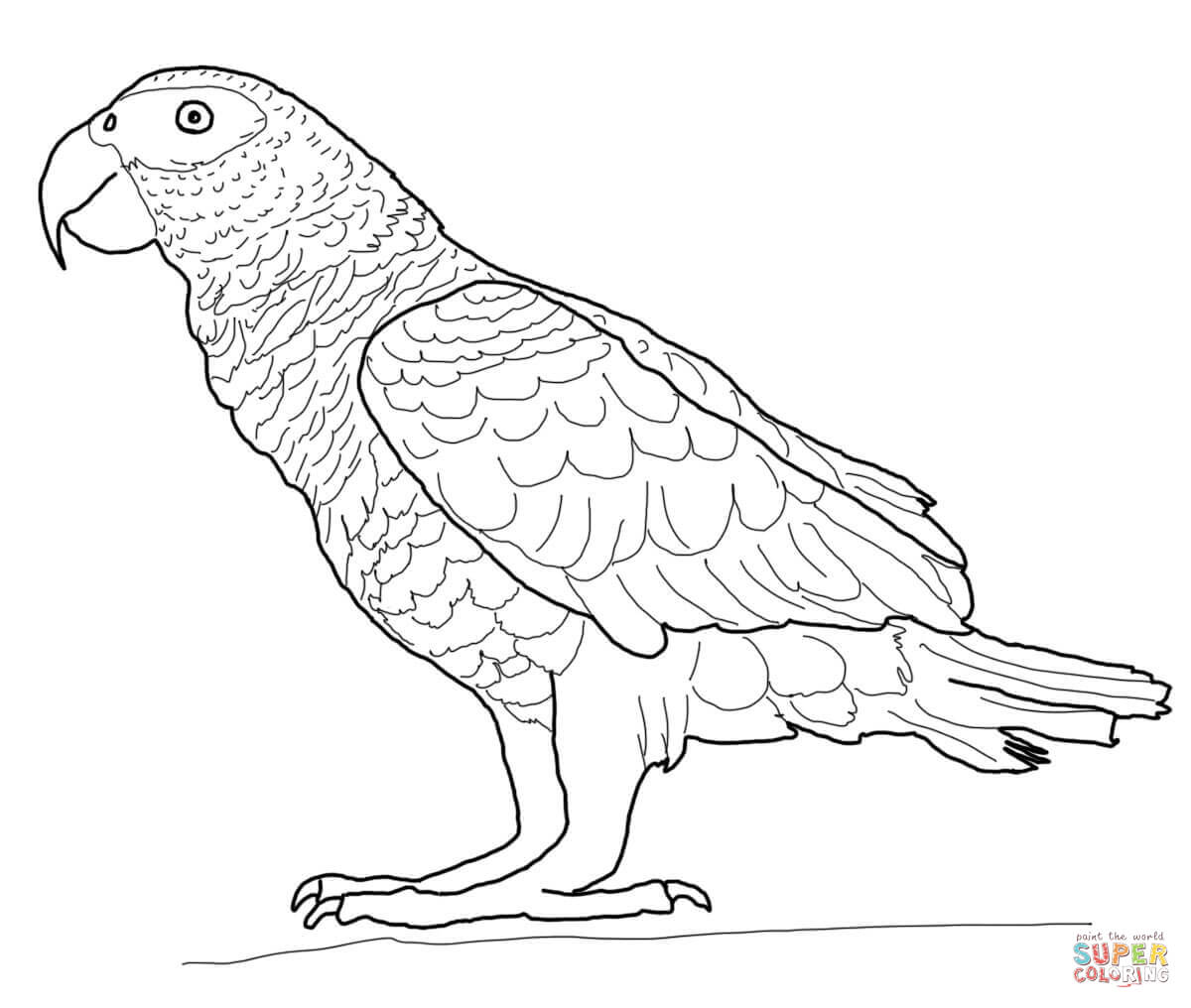 colouring picture of parrot free printable parrot coloring pages for kids colouring picture of parrot 1 1