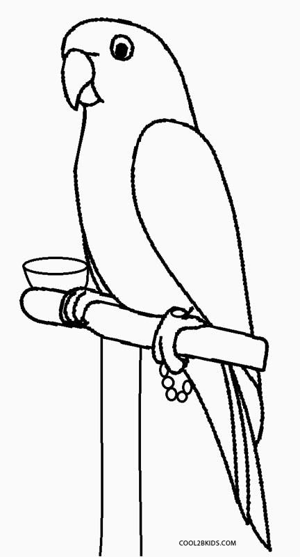 colouring picture of parrot lovely parrot coloring page download print online picture colouring parrot of