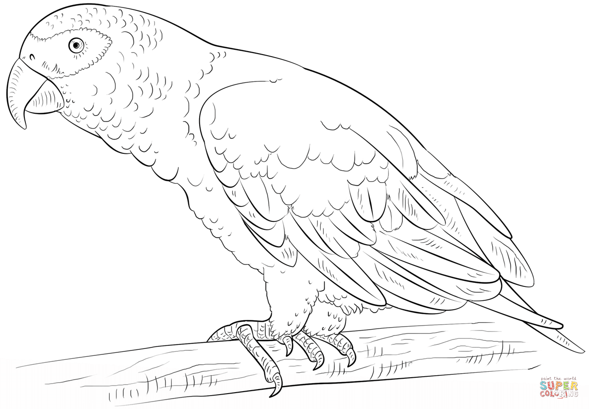 colouring picture of parrot macaw parrot coloring page parrot colouring picture of