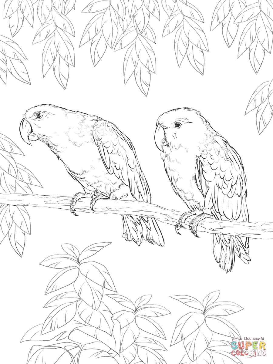 colouring picture of parrot mating parrot coloring page download print online of parrot colouring picture