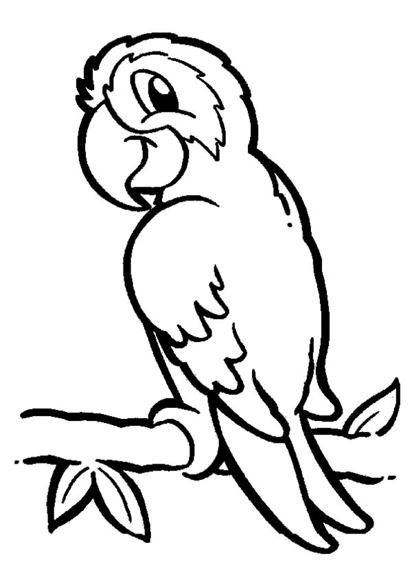 colouring picture of parrot parrot black and white clipart free download on clipartmag picture parrot of colouring