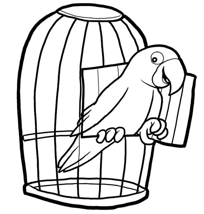 colouring picture of parrot parrot coloring pages coloring home colouring picture of parrot