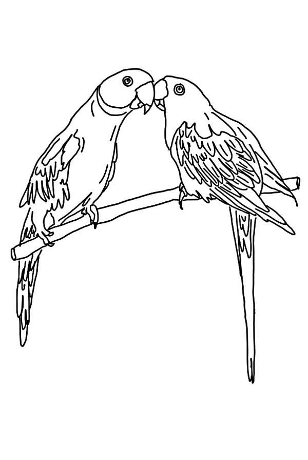 colouring picture of parrot parrot is flying coloring page download print online parrot picture colouring of