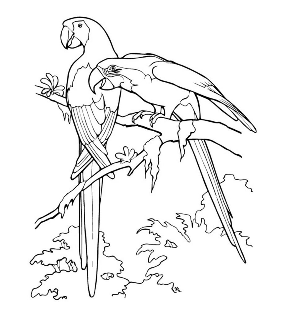 Colouring picture of parrot