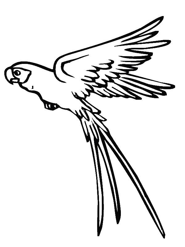 colouring picture of parrot pets coloring pages best coloring pages for kids colouring parrot picture of