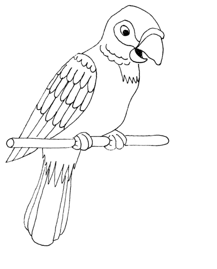 colouring picture of parrot printable parrot coloring pages for kids cool2bkids picture colouring of parrot