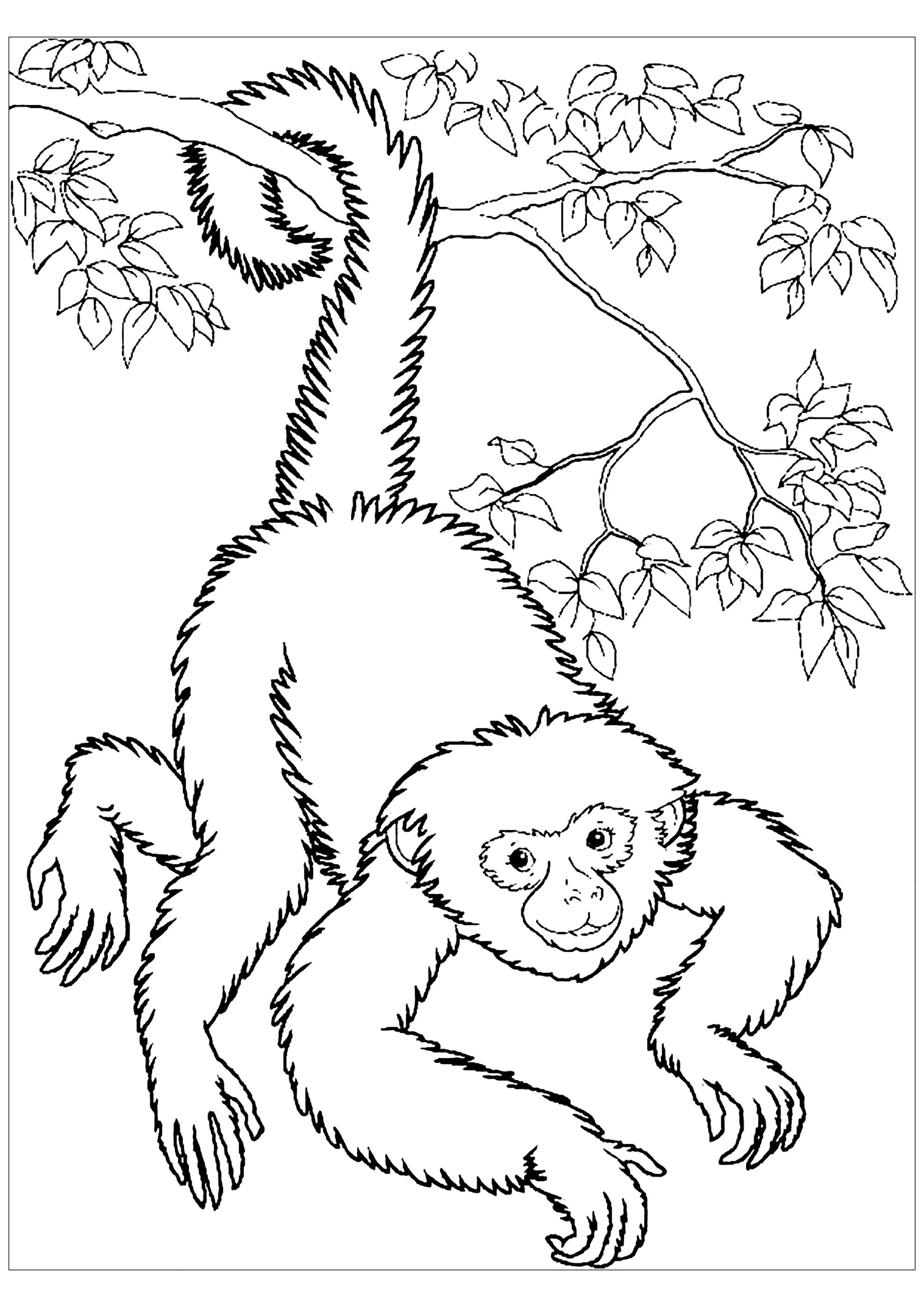 colouring pictures of monkeys monkeys free to color for kids monkeys kids coloring pages colouring of pictures monkeys