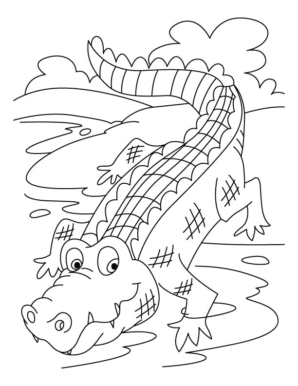 crocodile color crocodile line drawing at getdrawings free download color crocodile