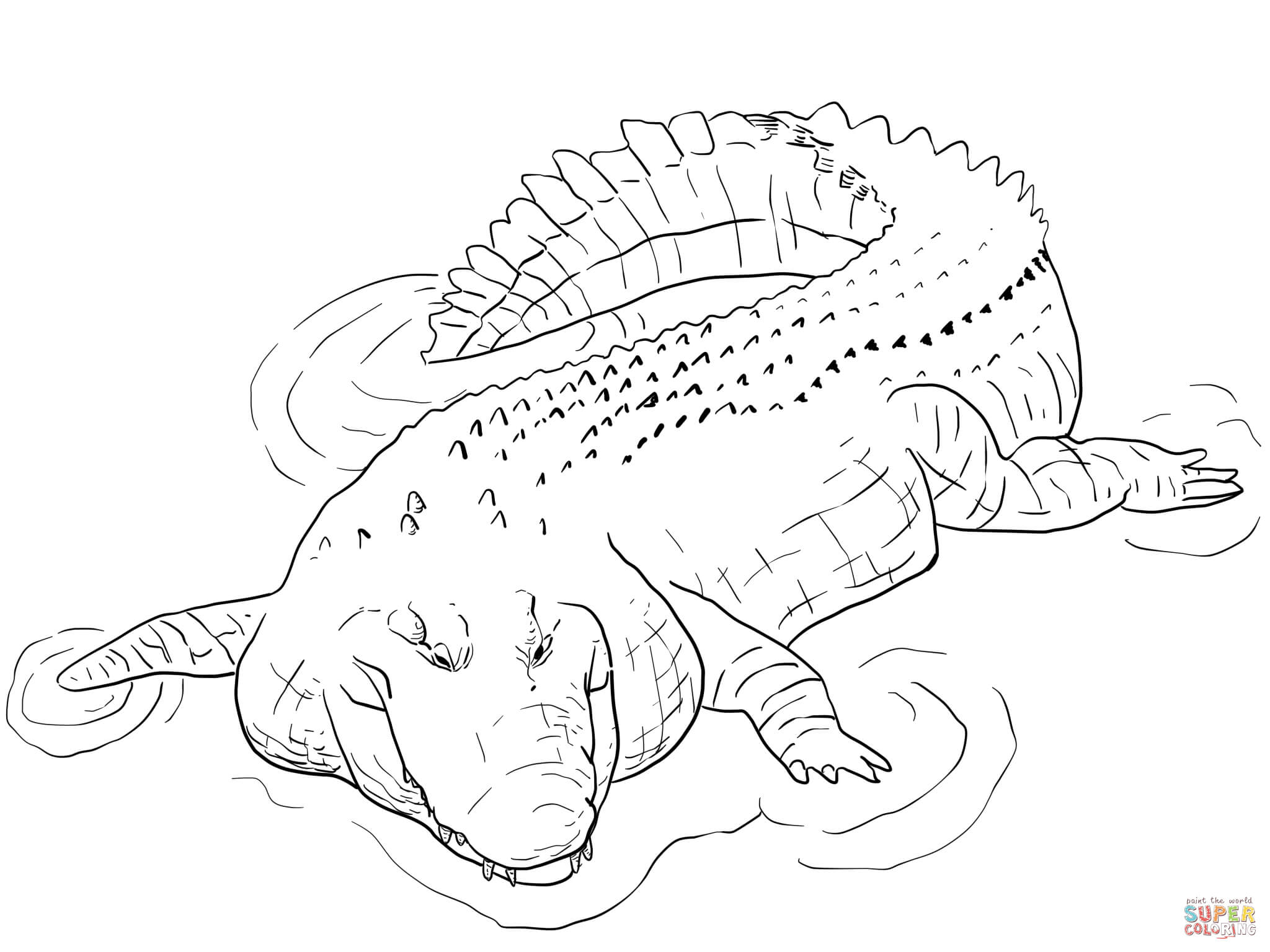 crocodile color crocodiles free colouring pages color crocodile