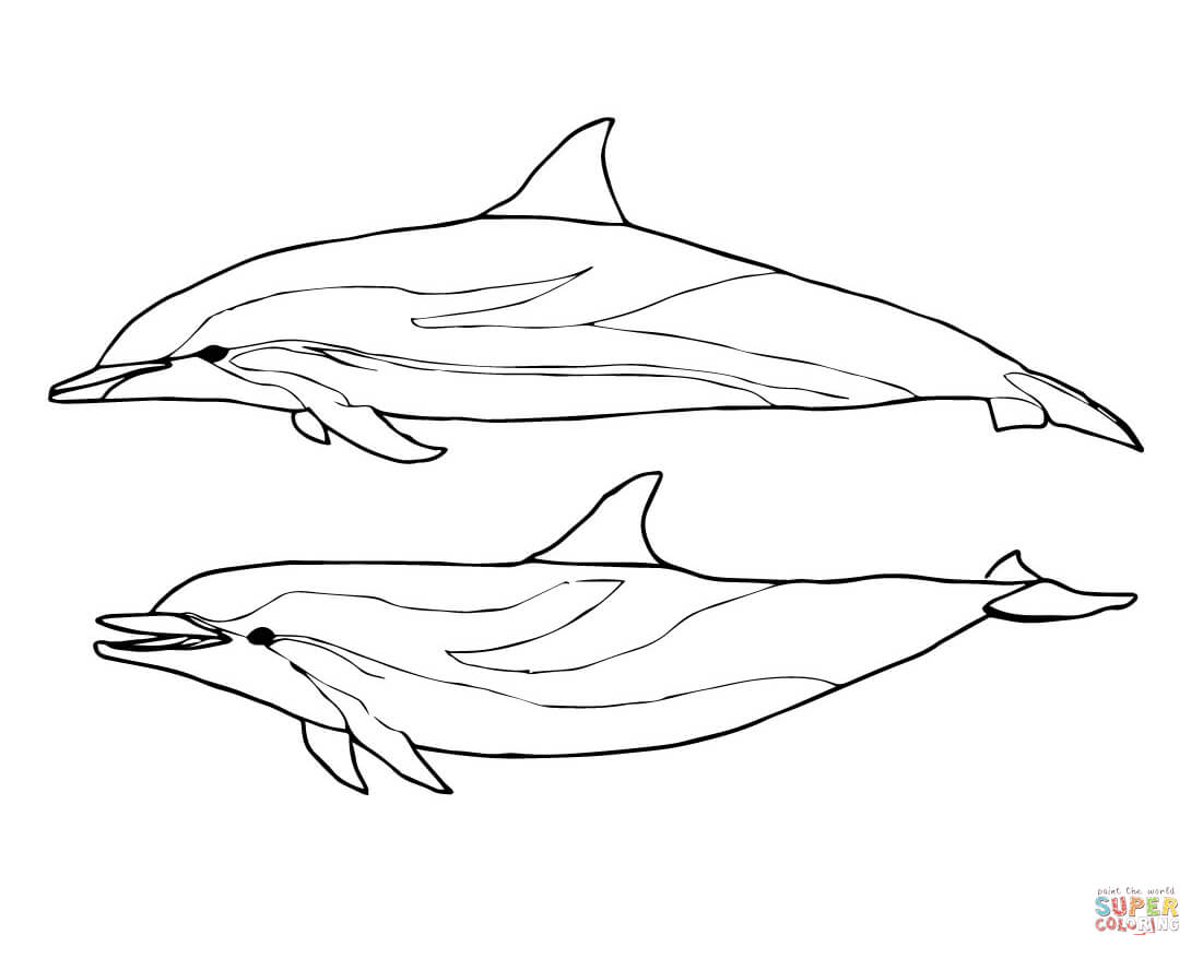 cute dolphin coloring baby dolphin coloring pages getcoloringpagescom cute coloring dolphin