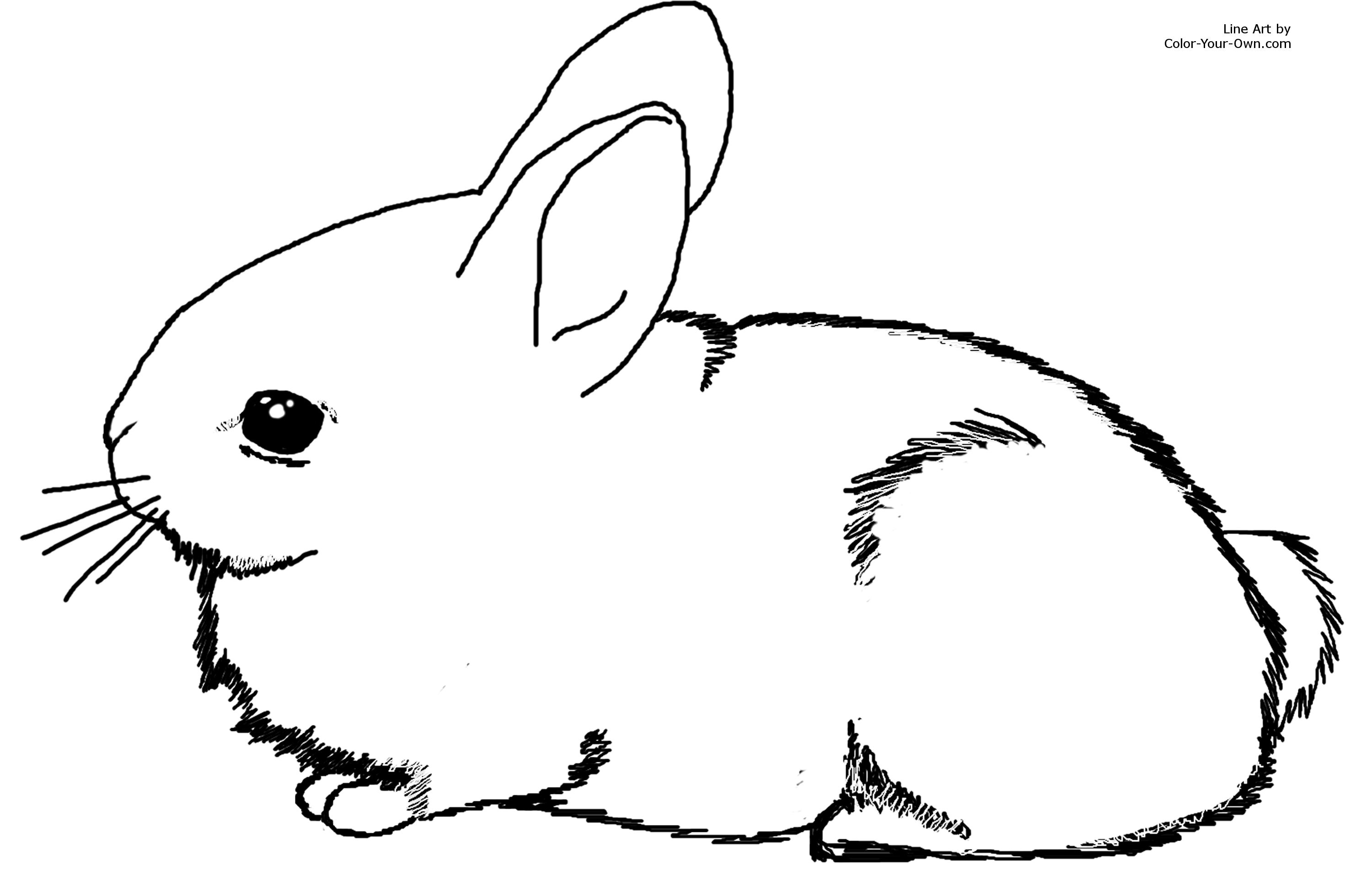 cute rabbit coloring bunny outline drawing free download on clipartmag cute coloring rabbit