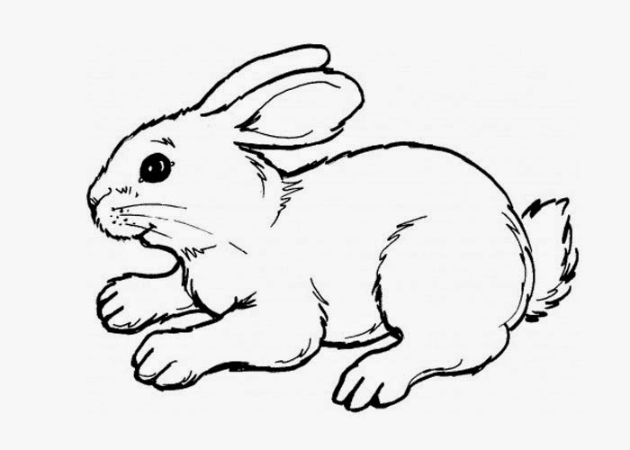 cute rabbit coloring cute bunny coloring pages at getcoloringscom free rabbit coloring cute