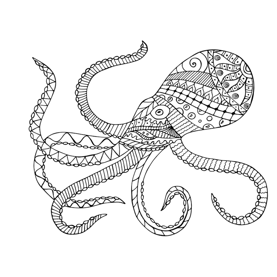 cuttlefish coloring pages coloring pages cuttlefish coloring pages cuttlefish