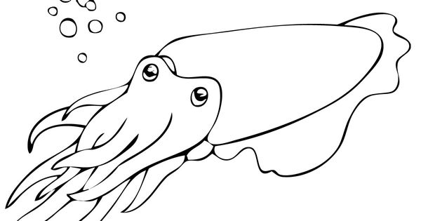 cuttlefish coloring pages cute cuttlefish drawing google search letterpress cuttlefish pages coloring