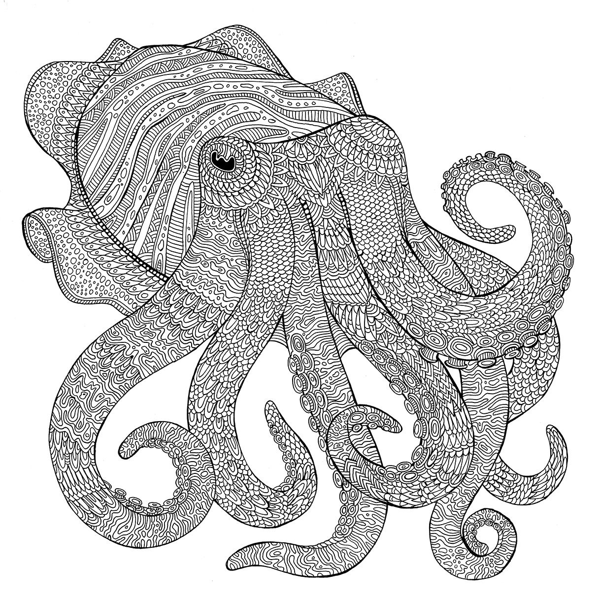 cuttlefish coloring pages cuttlefish coloring download cuttlefish coloring for free cuttlefish coloring pages