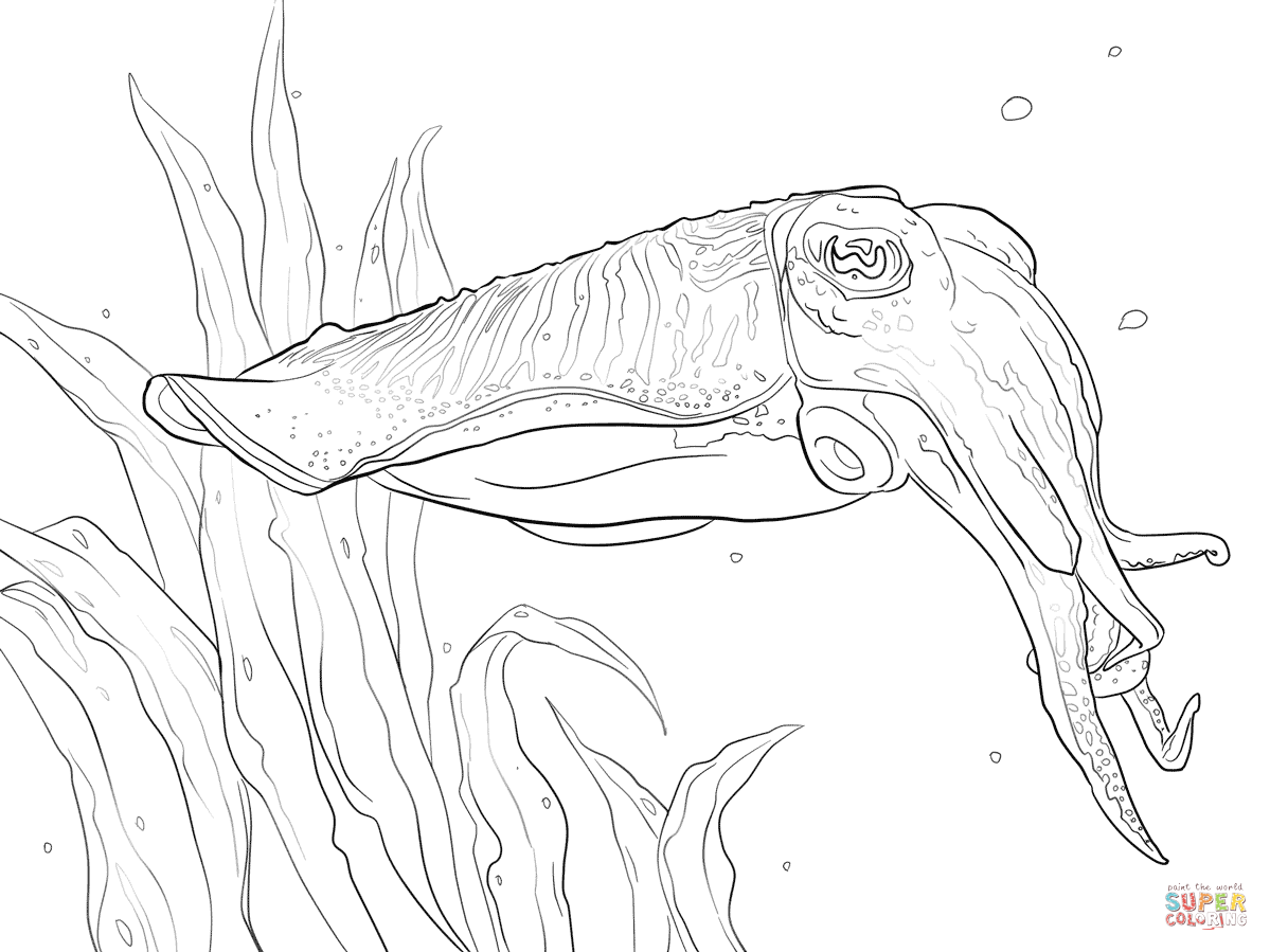 Cuttlefish coloring pages