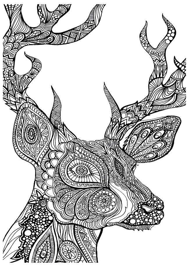 deer color pages deer coloring pages coloring pages to print color pages deer