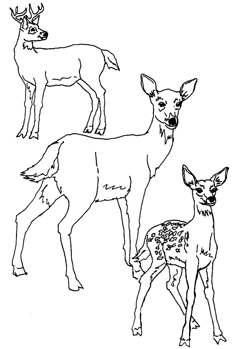 deer color pages free printable deer coloring pages for kids color pages deer