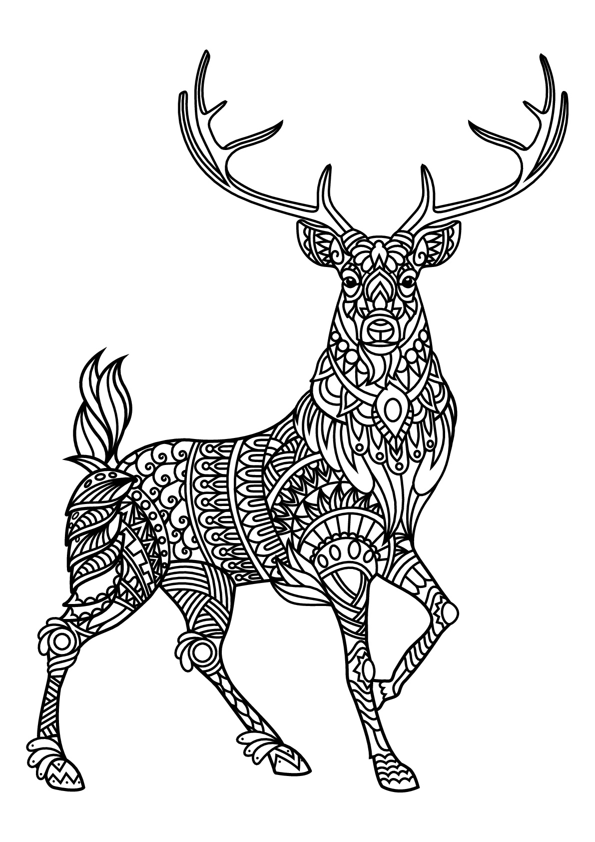 deer color pages print download deer coloring pages for totally color deer pages
